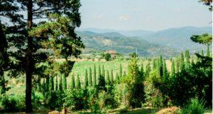 paesaggio cipressi