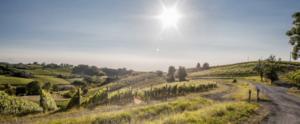 Tra le vigne nel Gavi