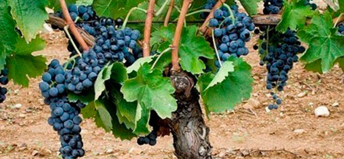 vitigni-basilicata