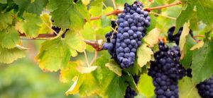 vitigni-emilia-romagna