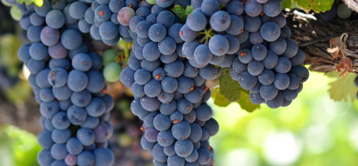 vitigno-piemonte