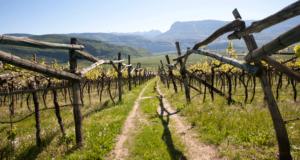Passeggiata tra le vigne verso Caldaro