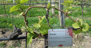 Tenuta Lieselehof il Museo delle viti