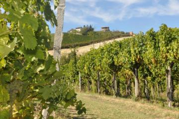 Il-Moscato-d'Asti