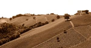 Panorama sulle colline picene