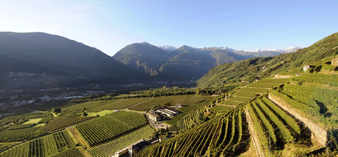 Terrazzamenti in Valtellina sulla Strada dei Vini della Valtellina