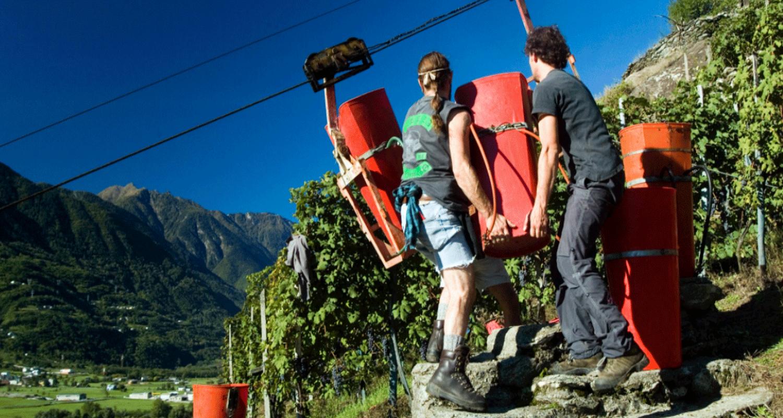 Viticoltura eroica in Valtellina