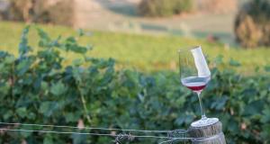 Officine Turistiche il Monferrato e il Grignolino