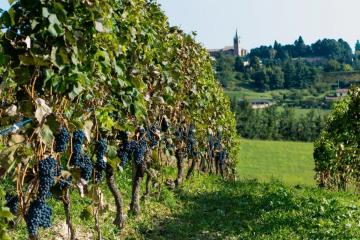 Officine Turistiche splendida vista in Monferrato e Infernot