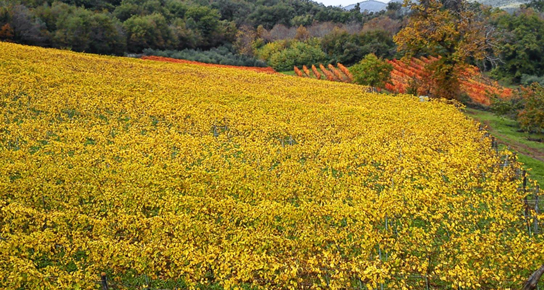 Vigne-in-autunno-Il-Verro
