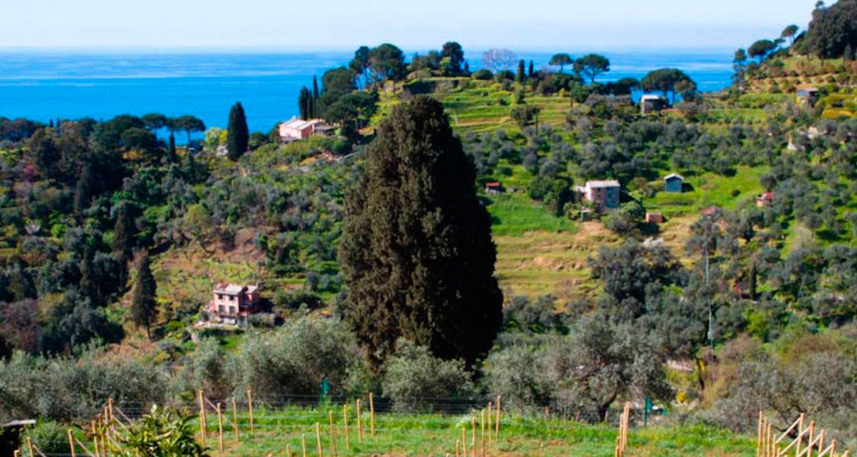 Il-mare-a-Portofino