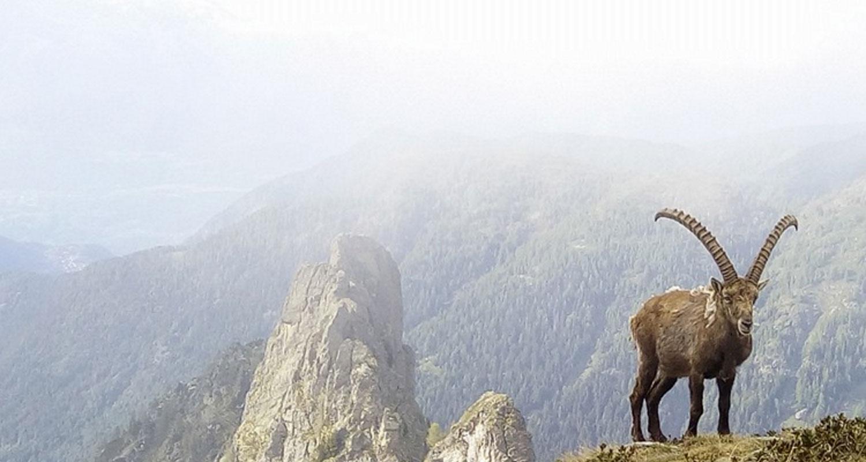 Alta-Val-Gerola-panorama