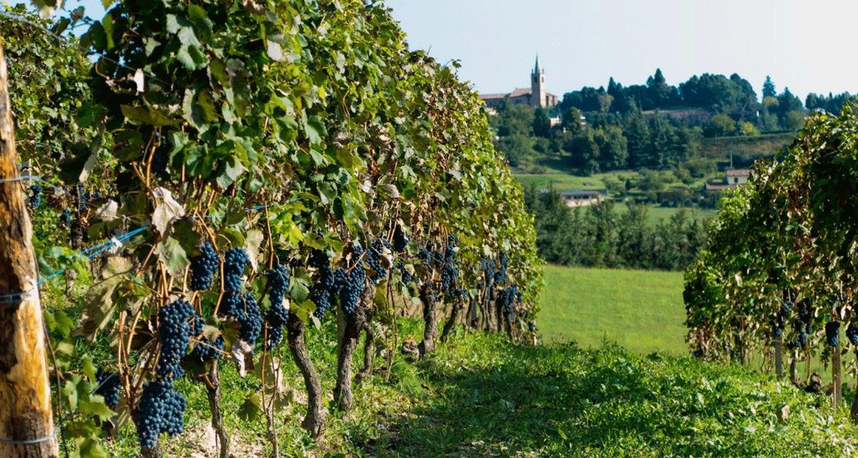 Officine-Turistiche-splendida-vista-in-Monferrato