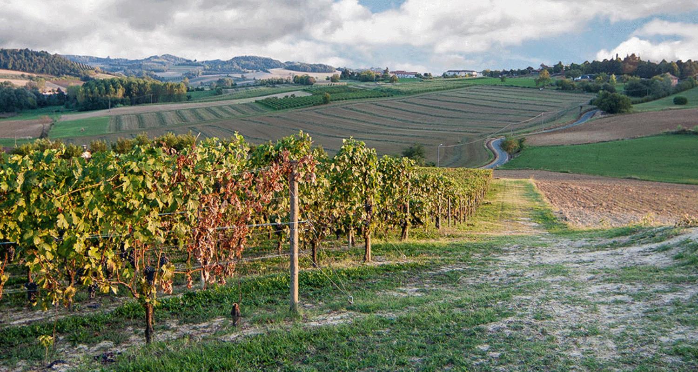 Officine-Turistiche-ti-porta-in-Monferrato