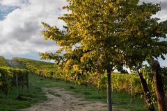 In-Monferrato-con-Officine-Turistiche