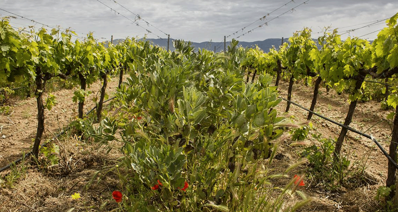 Officine-Turistiche-tra-le-vigne-in-Sardegna