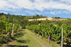 L'Azienda-Mongioia-e-il-Moscato-d'Asti